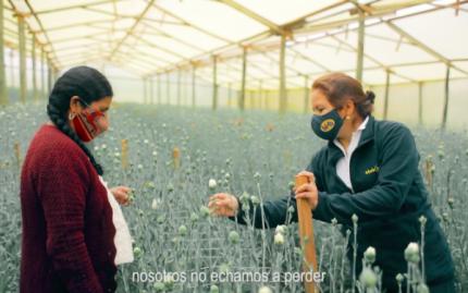 Banco Bisa apoya Floricultura de Cochabamba que no se rinde ante la pandemia