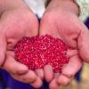 Lo m谩s le铆do: Per煤 se mantiene como primer productor y exportador de quinua en el mundo
