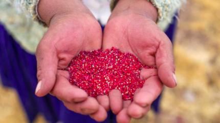 Lo más leído: Perú se mantiene como primer productor y exportador de quinua en el mundo